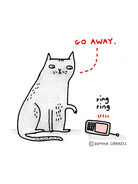Introverted Cat